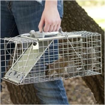 Havahart-1083-Pige-cage-Easy-Set-pour-cureuilsrats-Petite-taille-0